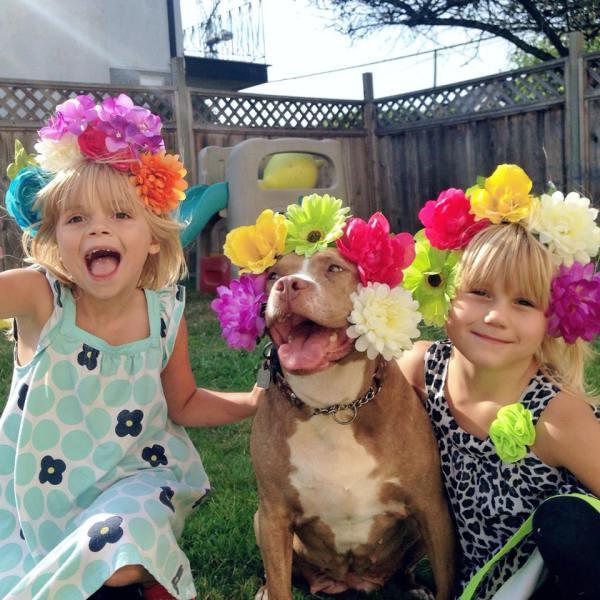 lexy the elderbull; pitbull myths; pitbulls and kids; pitbull advocate; pitbull love