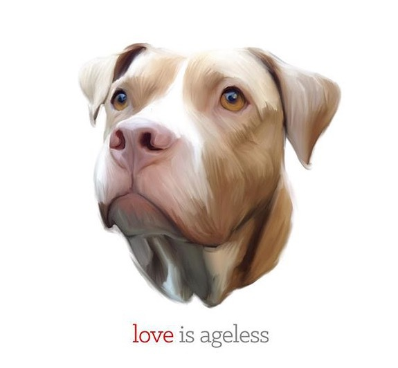 senior dog; pitbull love; love senior dogs; love is ageless; lexy the elderbull