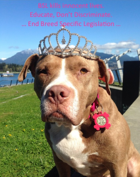 end bsl; breed specific legislation; lexy the  elderbull; pitbull advocate; pitbull love