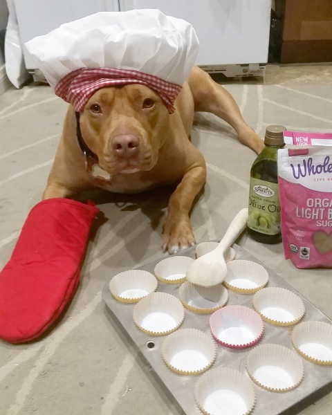 lexy the elderbull; elderbull; homemade dog treats; bake  for your dog; dog treats; elderbull; healthy  dog; healthy dog treats