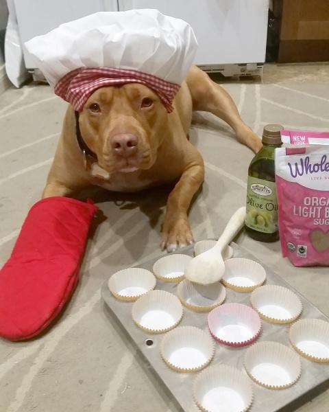 lexy the elderbull; elderbull; homemade dog treats; bake  for your dog; dog treats; elderbull; healthy  dog; healthy dog treats