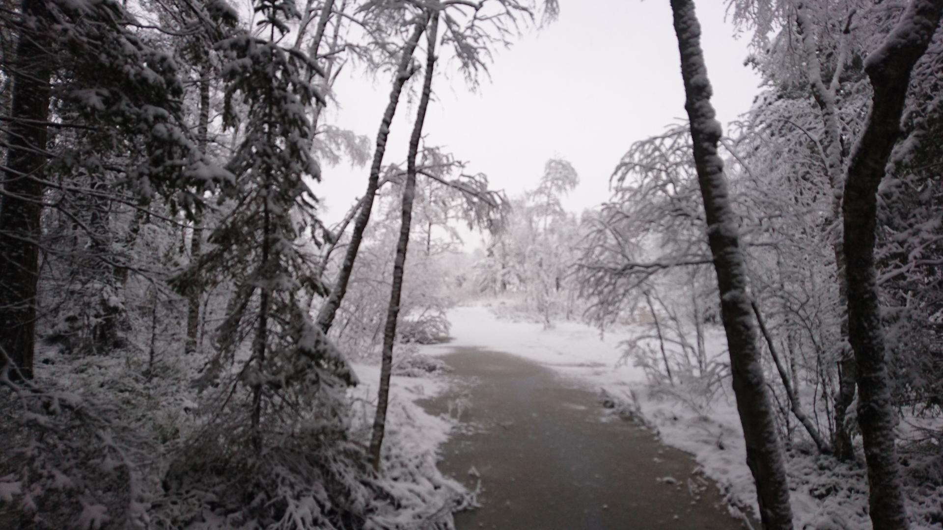 Winter run, Ågesta