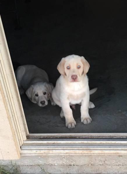 Sissy x Duke