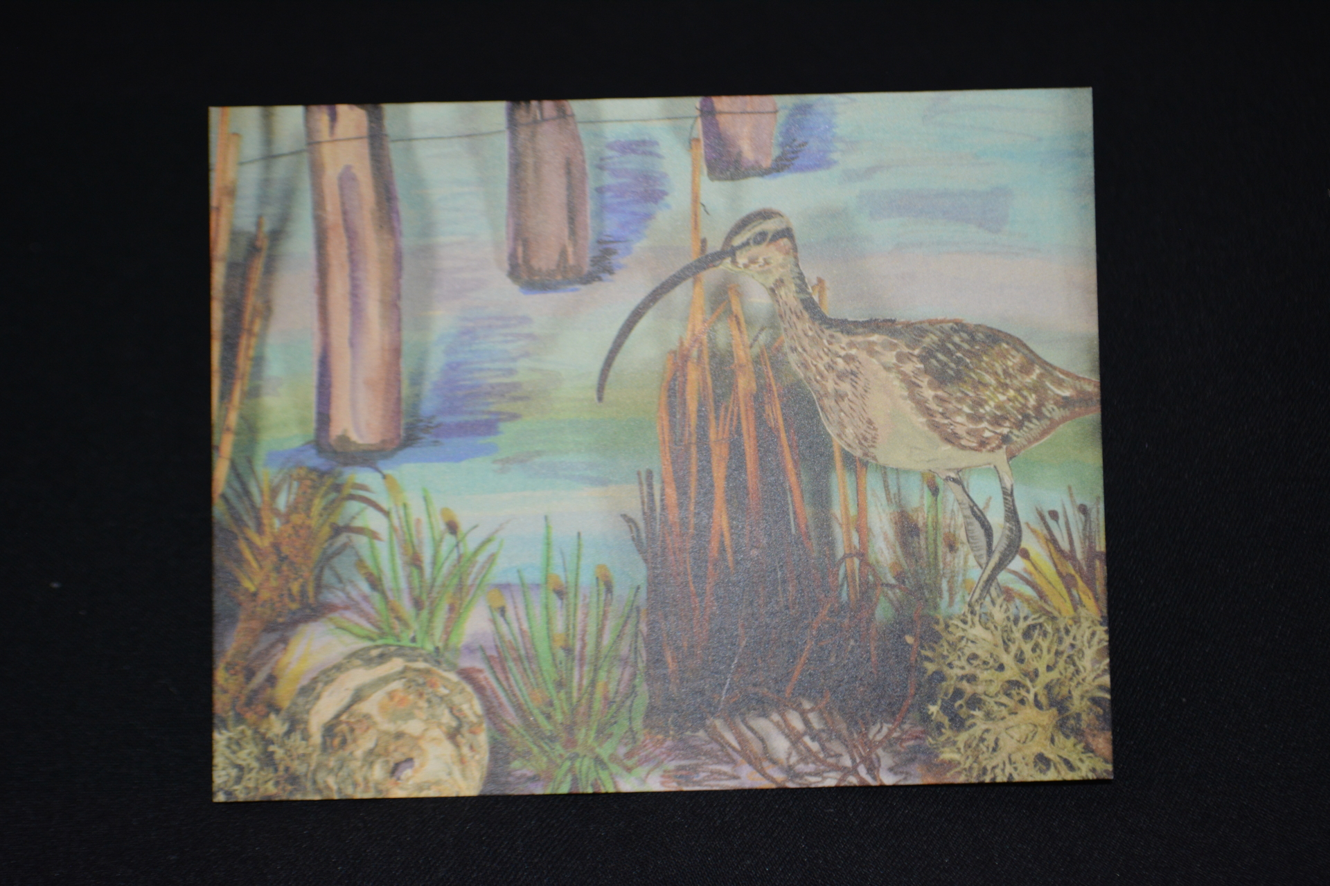 Whimbrel Greetings card