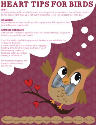 Heart Tips for Birds