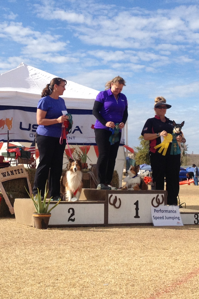 2016 USDAA Wild West Regionals Tempe AZ - I stood on a BOX