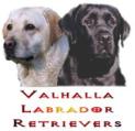 Valhalla Labrador Retrievers