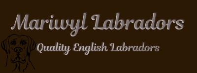 Mariwyl Labradors