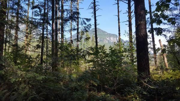mountain through trees