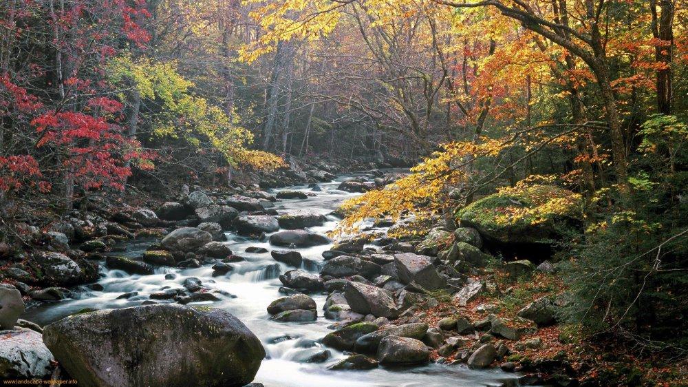 Smoky Mountains Fall Favorites