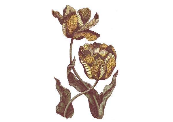 freelance illustration, floral illustration, zentangle illustration, line art, patterned tulip, zentangle tulip, hand drawn, handmade, zentangle floral, intrixate pattern, patterned flower