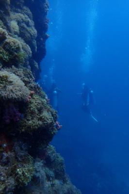 Gato Island Dive, Philippines