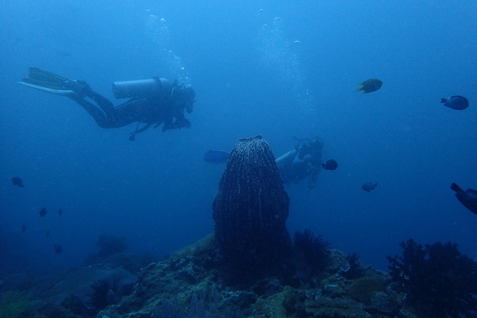 Sambawan Island Dive, Biliran Philippines