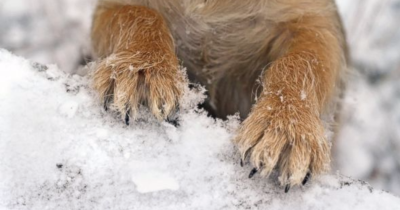 Rock salt and paws!