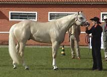Quarter Horse B