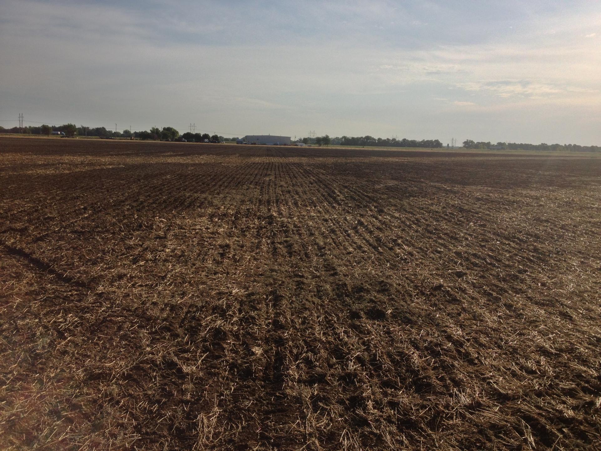 New Bermuda Field Sprigging