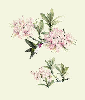 """Hummingbird & Azalea""          ruby-throated hummingbird and azalea   $60"