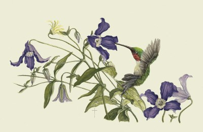 """A Clematis Moment""     ruby-throated hummingbird    $60"