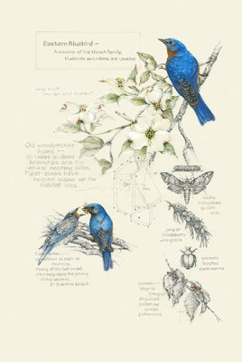 """Birds, Bugs and Berries - Bluebirds""  eastern bluebirds     $75"