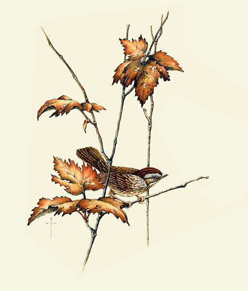 """Lincoln Sparrow"""