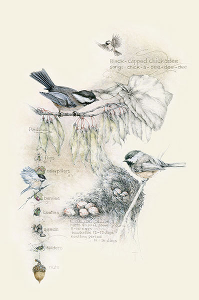 """Birds, Bugs, and Berries - Chickadee"""