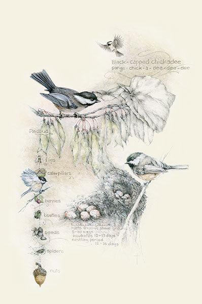 """Birds, Bugs, and Berries - Chickadee"""