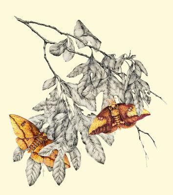 """Imperial Moth & Sassafras""       LG $60      SM $45"