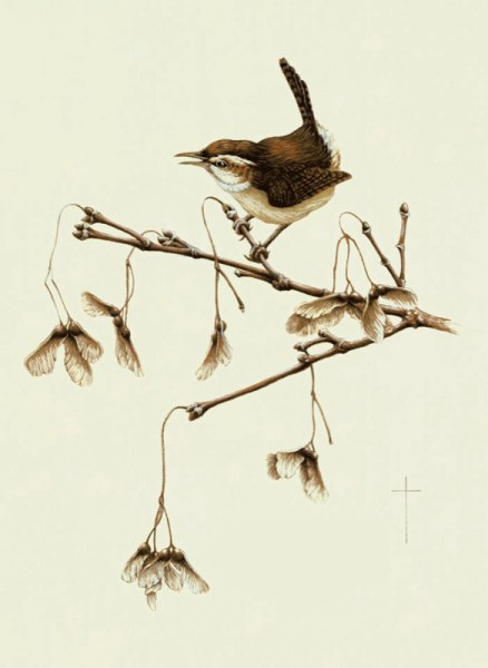"""Carolina Wren & Maple Whirlies"""