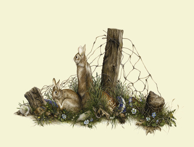 """Reclaiming the old Homestead""    cottontail rabbits     LG $110   SM $60"