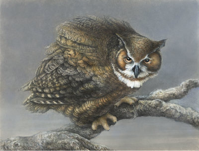 """Just Before Dawn""    great horned owl - gouache, pastel and pencil.    $ 4,200"