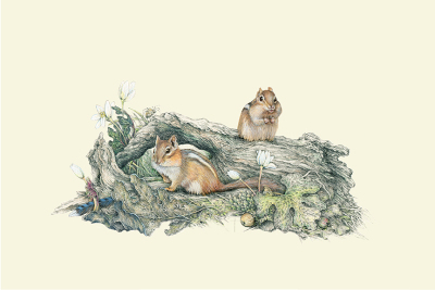 """April Chippies""   chipmunks     $60"