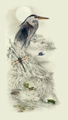 """Waterside Portraits"" great blue heron    LG $220      MED $85 (sold out)      SM $60"