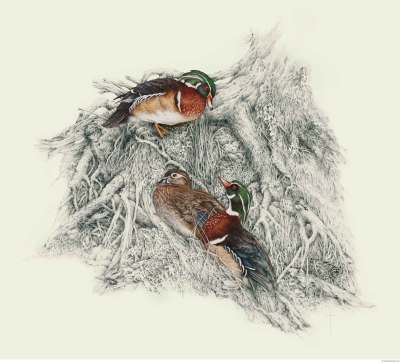 """Unexpected Guest""   wood ducks        LG $110    SM $60"