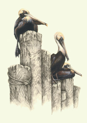 """""""Pier Pressure""""   brown pelicans    LG $60"""