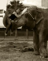 elephant marketing nicole
