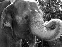 elephant marketing maude