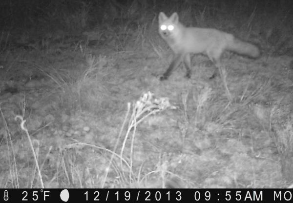 Fox Night 2