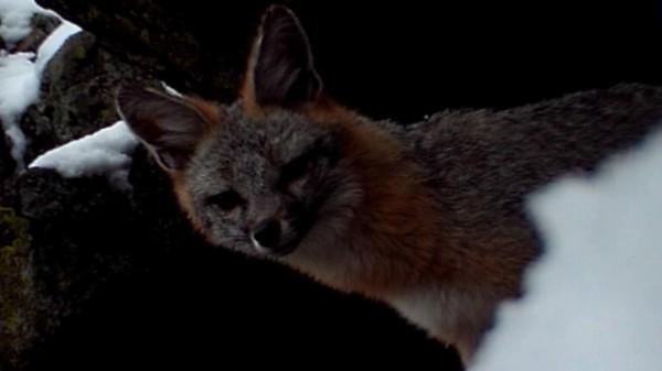 Fox Snow Cave