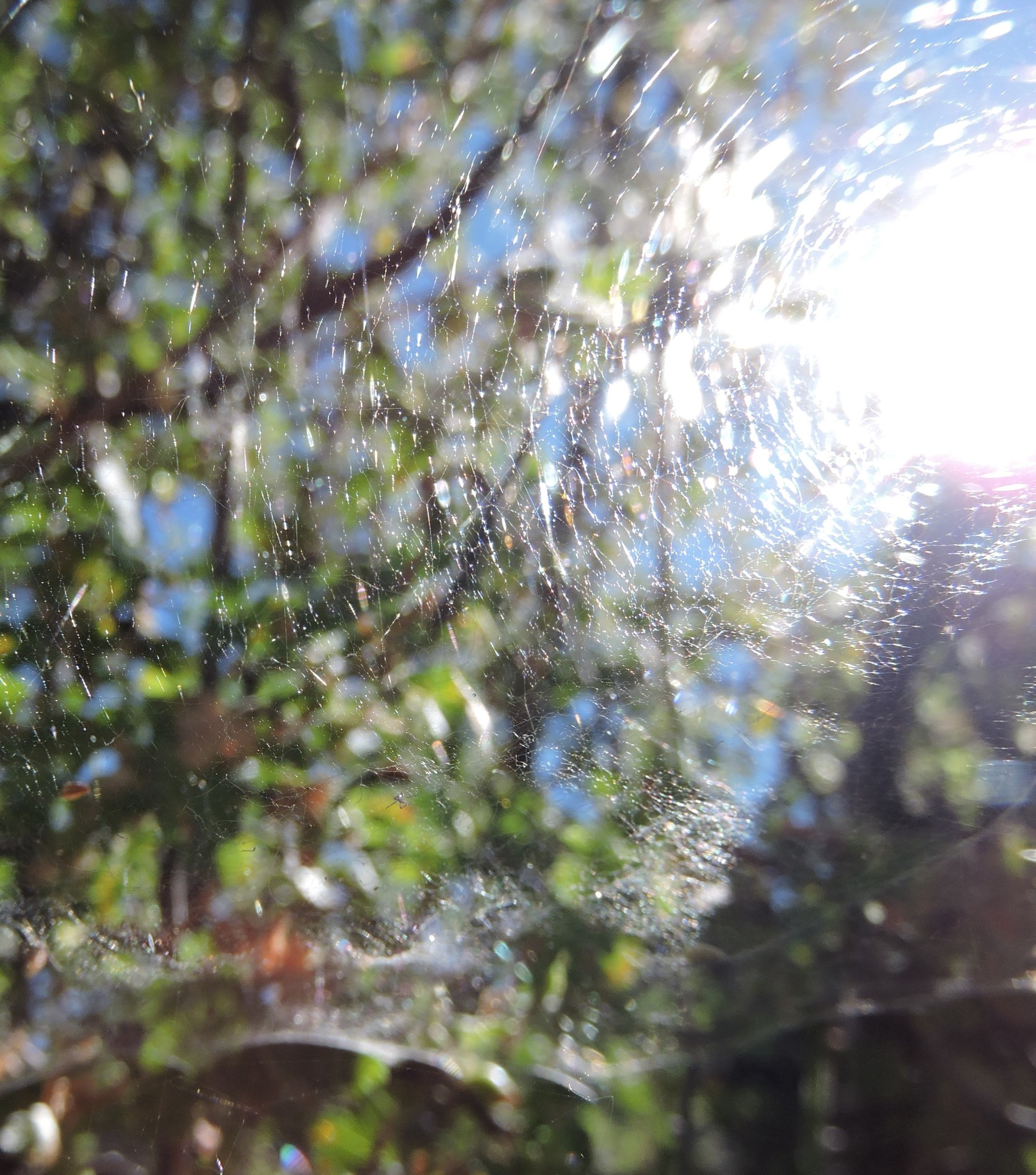 Light Web