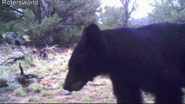 Bear Close