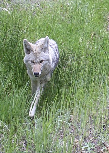 Coyote ravine