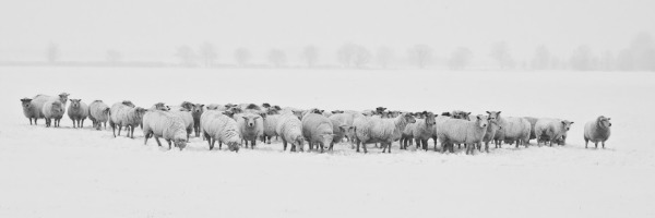 Winter Weather Adjustment
