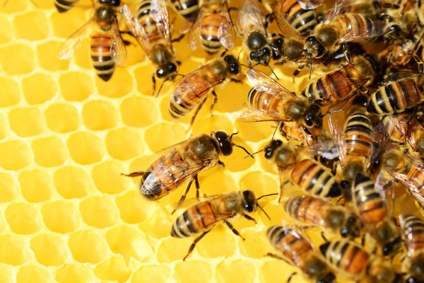 LIVING WITH BEES