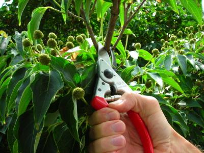 Midseason Maintenance For Trees, Shrubs & Perennials