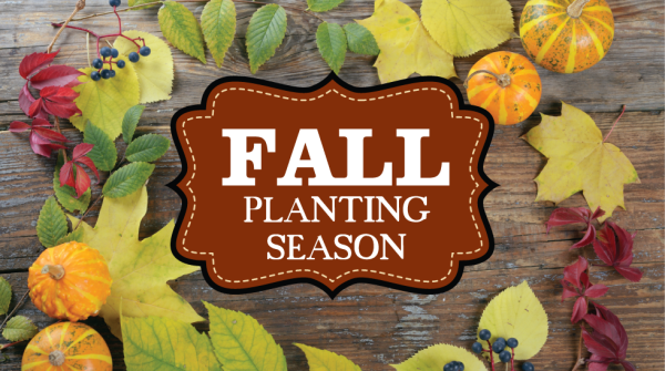 Fall Planting is just around the corner...