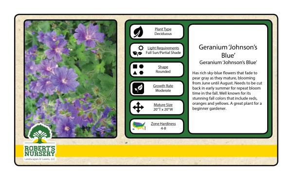 Geranium - Johnson Blue