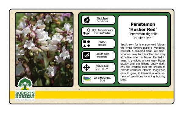 Pennstemon - Husker Red