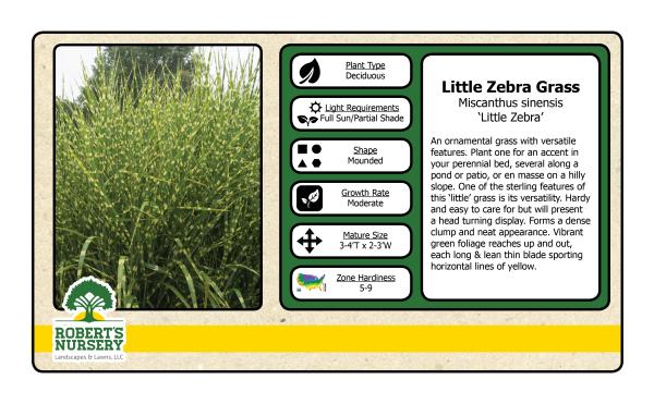 Maiden Grass - Little Zebra