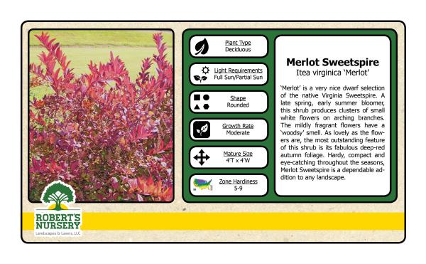 Sweet Spire - Merlot