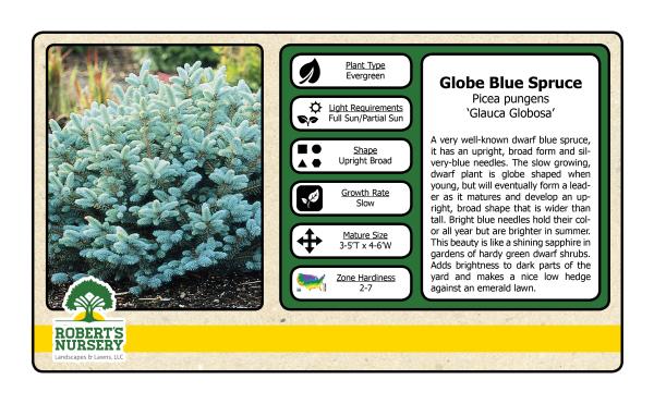 Spruce - Globe Blue
